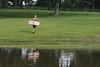 Winch Pond WakeSkate 05 30 2008 A 009
