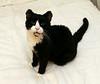 """Oreo says """"Meow""""."""