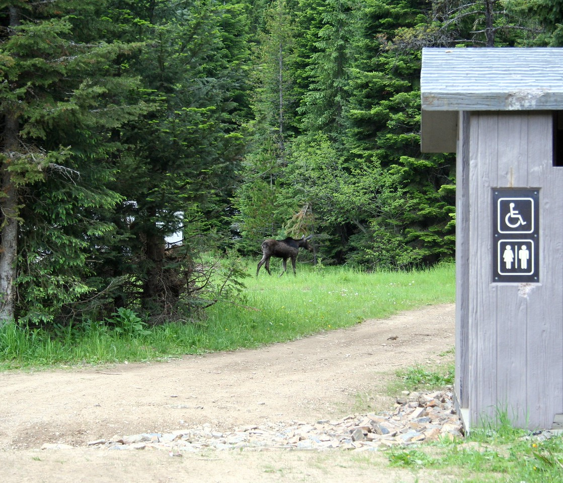 Not only is there a moose in this shot there is also a chipmunk. If you look close it is crossing the dirt road.