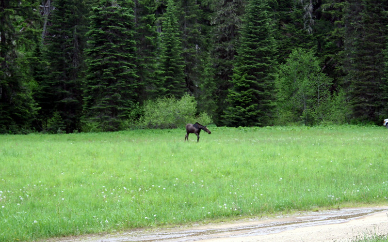 During our dinner break we saw a moose.
