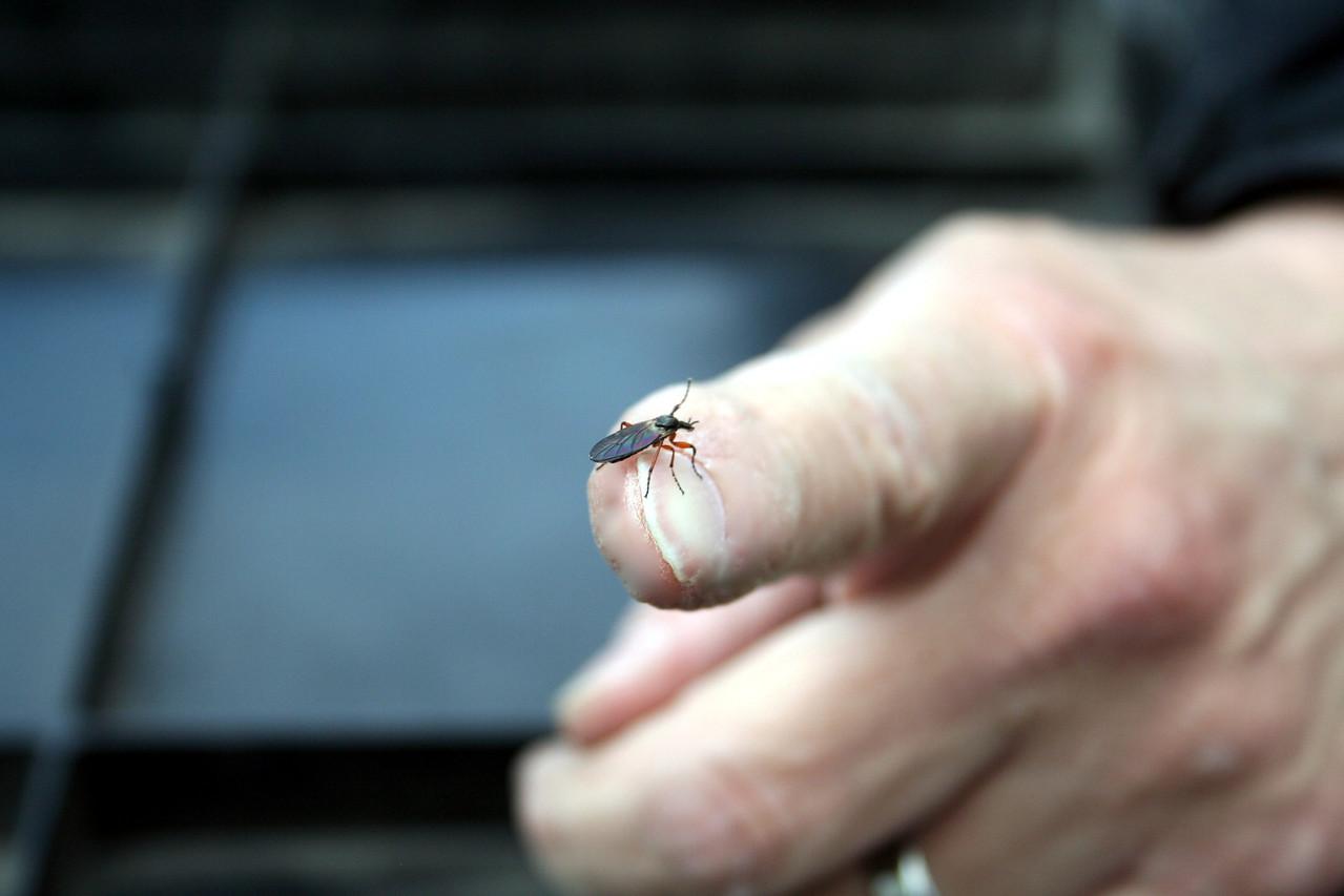 Dad found a bug