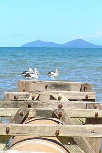 We used to play on lot on this as kids. Storm water drain. That is Dunk Island in the background.