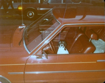 Snoopy in Ranch's Red Galaxie 500