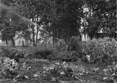 my garden in my Empress year