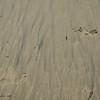 Footprints in the sand<br /> Natural Bridges State Beach<br /> Santa Cruz, California July 2009