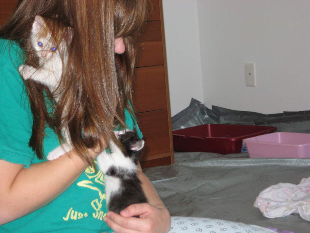 Bri with feral kittens