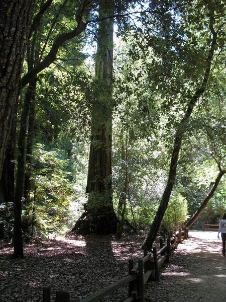 Big Basin Redwoods State Park July 2009