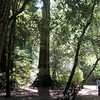 Big Basin Redwoods State Park July 2009