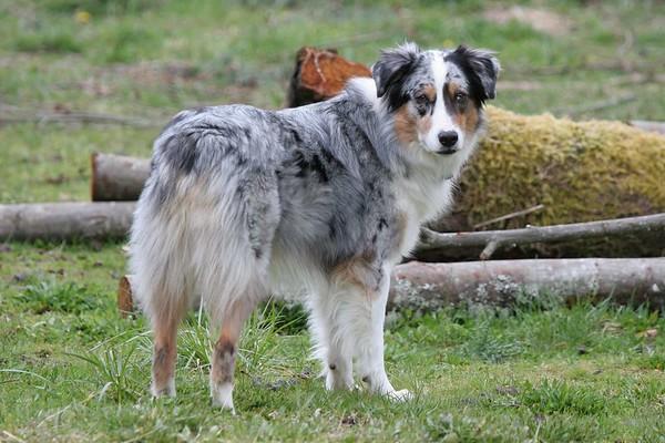 "The family dog ""Khepri"""
