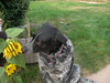 Pepper takes time to smell the flowers.