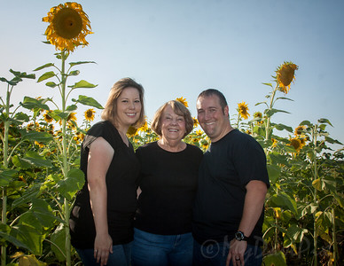 Miller_Sunflowers_A-12