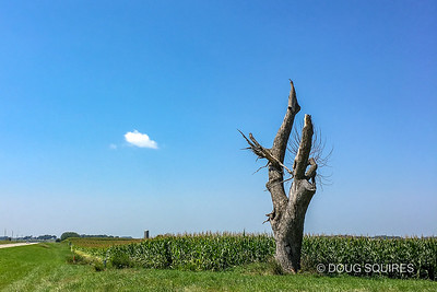 Lone tree between Emmitsburg & Ruthven