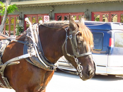 # Our carriage horse - Jackson, French Quarter, Charleston, SC, march 23, 2019, 1148am IMG_7466