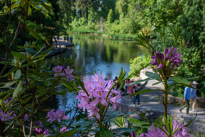 Crystal Springs Rhododendren Garden