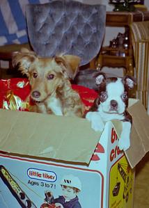 Bambi (Dog), Toto (Dog)