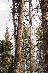 Can you spot the woodpecker?