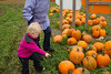 Pumpkin hunting at Mosby's Pumpkin Patch