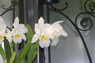 so many orchids