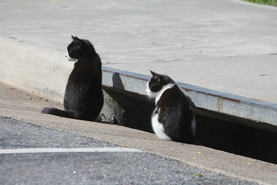 kittens living in a storm drain at the VA Welcome Center