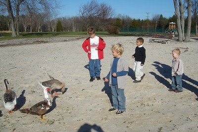 Boys and geese