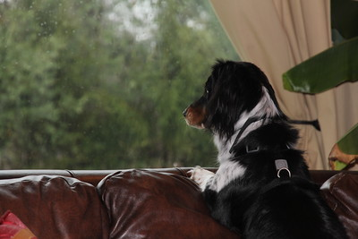 it's a rainy day....it's a rainy day.....who wants to go out and play?