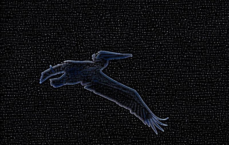 Pelican 00_MG_1843