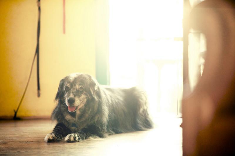 Leo the old dog.