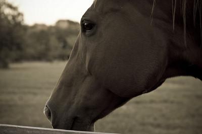 Horse portrait-8353