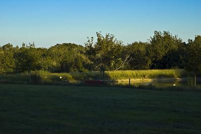 Southeast Texas landscape l-8324