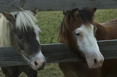 Little horses-8342