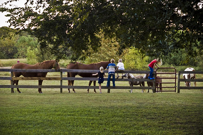 Horses and kids-8359