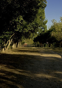 country lane-8275