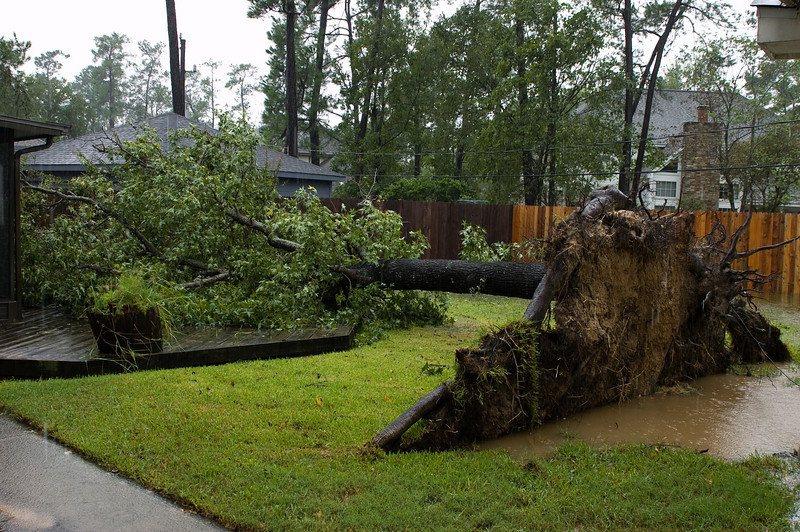 Another look at the tree, the storm is still raging but I took this during a lull.