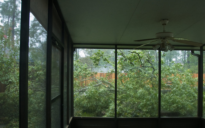 Looking out my back porch, the first look at the fallen tree in the back yard.