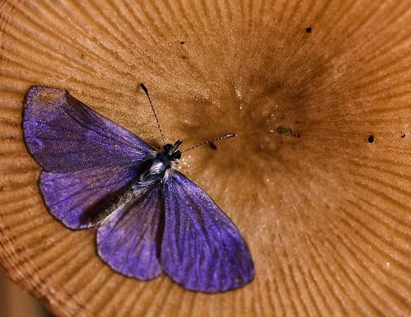 Purple Moths-2607