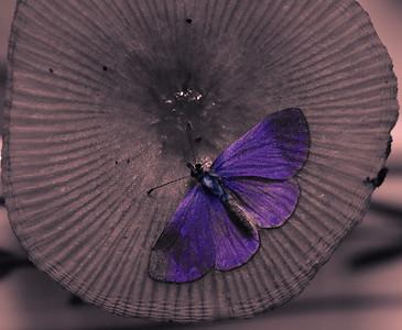 Moth-2606