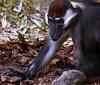 Monkey-0111
