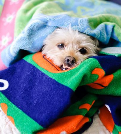 Warm Towels-1388