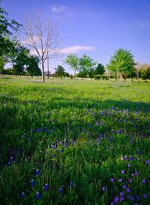 Blue Bonnett Lane at Chappell Hill-7664