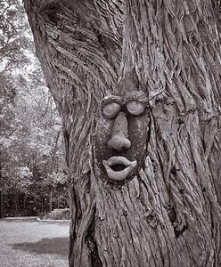 Treeface-7586