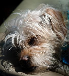 sleeping in sunlight-7379