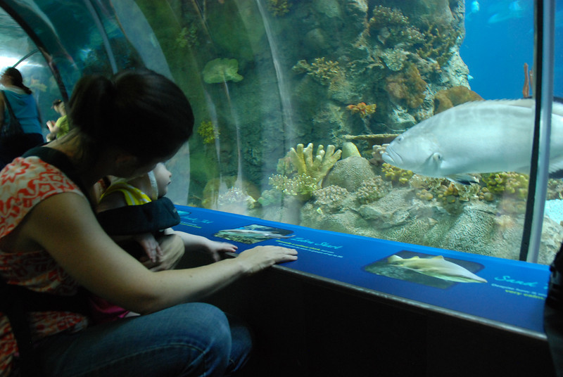 Sophia loved the aquarium, but she was pretty tired by then!