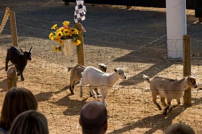 Go goats go