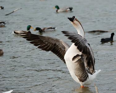 Goose ready for a Hug