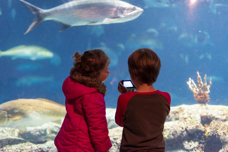 Visit to the South Carolina Aquarium