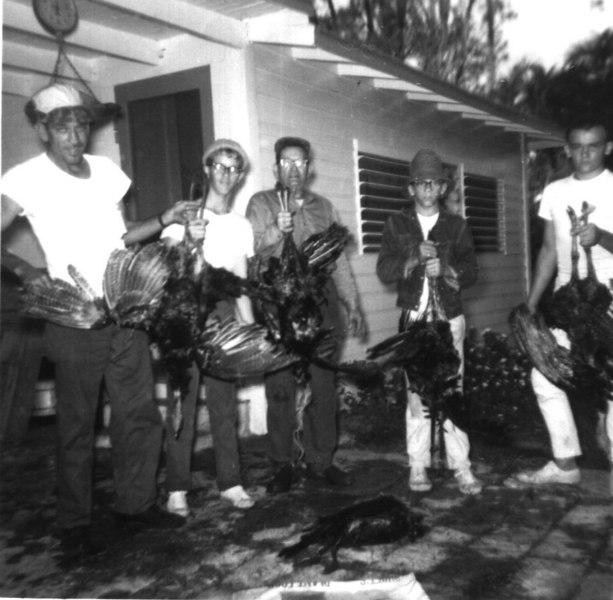 Turkeys '64