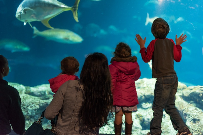 Visit to the South Carolina Aquarium