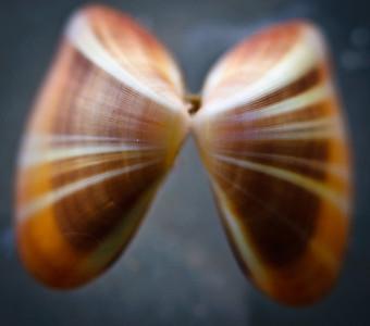 Destin shells-0130