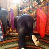 Christmas 12-25-14-37