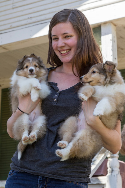 "At Destiny Shelties, 5/18/13. Farley on left, with brother ""Flyer"" on right."